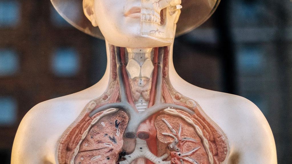 Vista dell'anatomia del lobo superiore dei polmoni