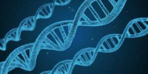 Stringa di DNA al microscopio, D Siena passi in avanti della ricerca sul mesotelioma