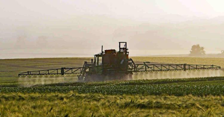 Applicazione di diserbante su un campo di grano. Erbicida Roundup: Bayer patteggia in America