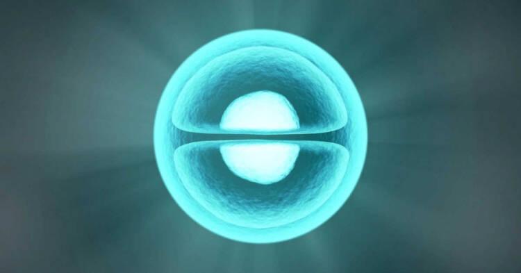 Divisione cellulare al microscopio